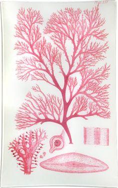 Pink + John Derian = love