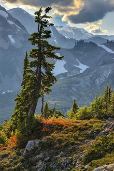 'A Mountain Scene' by Michael Riffle, via Flickr; North Cascades National Park, Washington