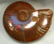 Just beautiful - Opalized Ammonite