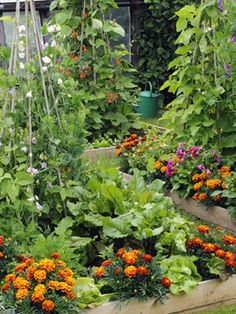 Love flowers and vegetables planted together!  Mix ornamental plants with edible plants in your veggie garden.