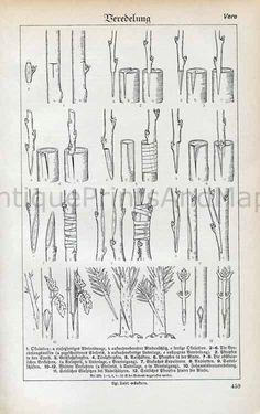 Plant Tree Grafting Propagation Methods