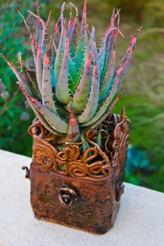 Blue Elf Aloe, stressed.  These are one of the greatest succulents for container gardens.  Practically impossible to kill (I've never seen one this stressed).  Put some in a pot alone with room for more and watch them have massive amounts of baby plants for you.  Will take full sun or afternoon sun, but prefers morning sun.  When healthy, they're a gorgeous greenish-blue color and they have lovely orange flower spikes, too.