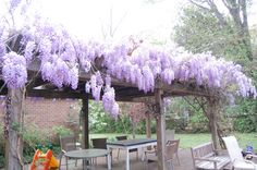 This lovely wisteria covered pergola deserves a furniture upgrade.