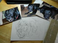 PART 1   Using a photo and masking fluid with watercolours black lab