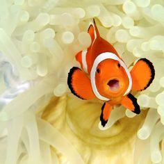 clown fish, sea animals cute, under the sea animals
