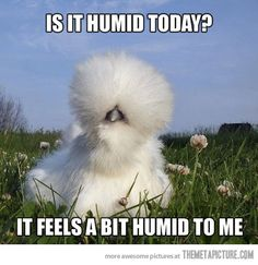 Is it humid?