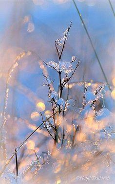 Nature's season decoration