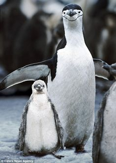 anim kingdom, funni anim, happy animals, news, anim smile, penguin smile, penguins, happi anim, cameras