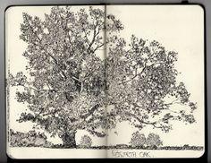 Ian Sidaway Fine Line tree sketch art