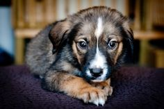 Dog Rescue Groups In Asheville Nc