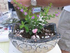 Amy Kate Gardens - Gift Garden