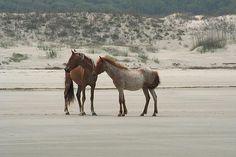 Cumberland Island, Georgia Wild Horses on the beach!!!!!