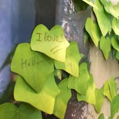 ivy leave sticky notes