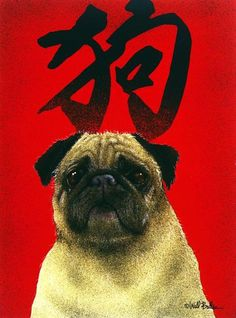 pug represents good luck and fortune...good...cuz I have 3!