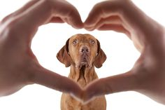 Adorable pet photo session idea. | photographer Barna Tanko | Dog | Photography | Family | Puppy