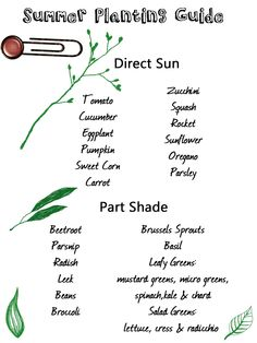 Summer Planting Guide