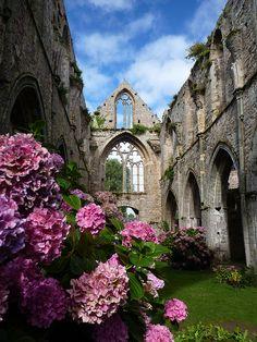 beauty amongst the ruins