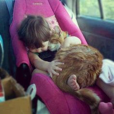 car seats, little girls, kitty cats, cuddle buddy, pet, road trips, baby animals, baby cats, kid