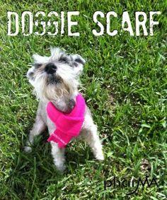 DIY Doggie Scarf — Phar-MA
