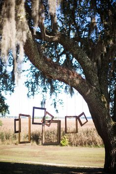 outdoor pictures! diy photo booth....have a camera out there for people to use - set it up on a tri-pod and have a timer? perfect! twin oaks has a huge tree like this! :D