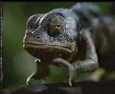 Budweiser Frogs Commercial - You're One Sick Lizard
