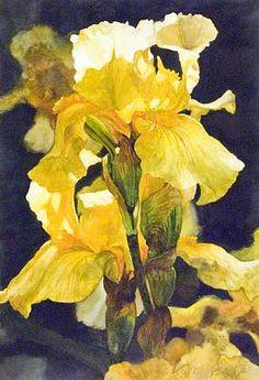 Pure sunlight.  Patricia Doyle