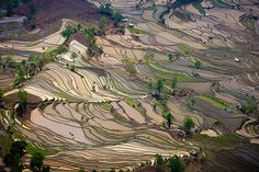 Aerial view of terraced rice fields in Yuanyang, China