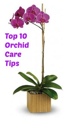Video: Top 10 Orchids Care Tips plant, orchids care, awesom garden, orchid care, aliv, orchid how to, garden idea, flowers, how to care for orchids