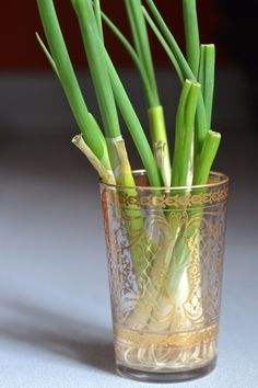 how to re-grow green onions - it's easier than you think!