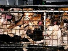 PHILIPPINES: 72 DOGS INTERCEPTED BUT 12 DIED OF SUFFOCATION B4 RESCUE: http://saynotodogmeat.net/2014/05/28/philippines-cruel-dog-meat-trade/… #saynotodogmeat Pls RT pic.twitter.com/7feGSwXogX