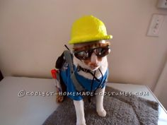 The Coolest Construction Worker Costume Ever (for a Cat!) ... Enter the Coolest Halloween Costume Contest at http://ideas.coolest-homemade-costumes.com/submit/