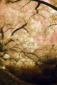Trees, Sky and Pond in Kamakura by aeschylus18917, via Flickr