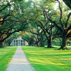 I want to live in a nice big southern house in Georgia or Alabama with a long drive up through trees that in the spring make your jaw drop