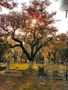 """Oaklawn cemetery - The Tampa Bay Historical Society states that this cemetary was set-up in 1850 for """"whites and slaves alike""""."""