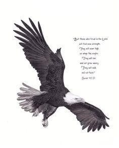 Bald Eagle Drawing by eaglefan36