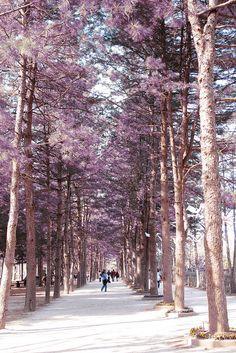 Nami Island, South Korea