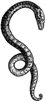 Celtic symbols of Cernunnos snake