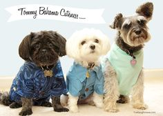 Tommy Bahama apparel from Petsmart with livelaughrowe.com
