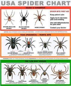 usa spider chart, spiders, garden