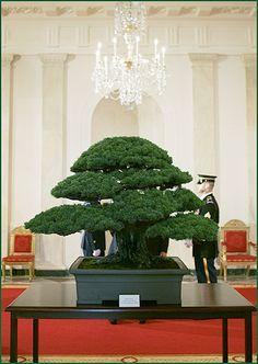 national bonsai foundation | 2006 national bonsai foundation supporting the national bonsai penjing ...