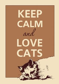 crazy cats, kitty cats, cat food, keep calm posters, quotes cats, keep calm and love cats, baby cats, cat ladi, cat lady