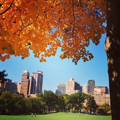 #FallFoliage by Kelsey Nemec via Twitter  #centralpark park conserv, fallfoliag, twitter centralpark, autumn, parks, central park, york citi, spacesnew york