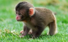 One of the most adorable monkey's I've ever seen