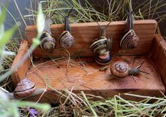 Snail couch for snails in the snail garden