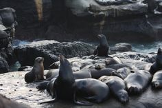Sea Lions getting ra
