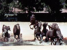 Mustang Horse Sculpture by Robert Glen in Texas, USA