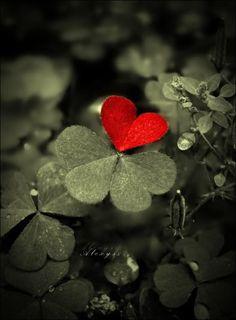 tattoo ideas, clovers, red, heart, valentine day