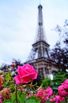 pink roses, eiffel tower, pari franc, franc pink, moham abdo