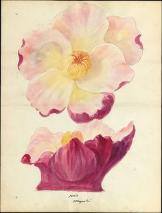 Lenox, Incorporated (established 1889). Design drawing of magnolia blossom of floral capital from loggia, Laurelton Hall, ca. 1900–15. The Metropolitan Museum of Art, New York. Gift of Lenox, Incorporated, 2006 (2006.428.5) #spring