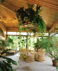 Sun Room with lots of plants